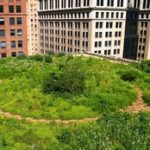 greening the city from the top down