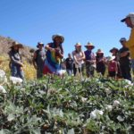 plant walk in the high desert of the Cuyama Valley with Jim Adams