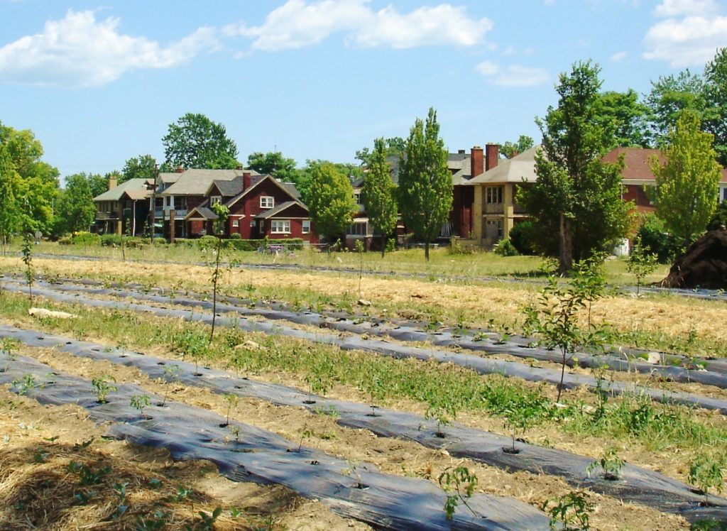urban farming in Detroit