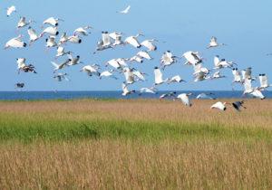 from EcoWatch on Louisiana's 2012 Coastal Plan