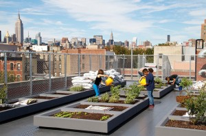 green roof urban farm in East Village