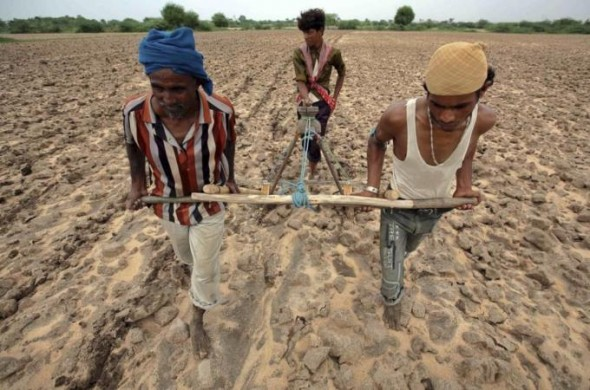 gmo agriculture, monsanto, india